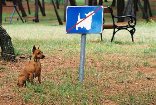 В Ярославле появятся новые площадки для выгула собак.
